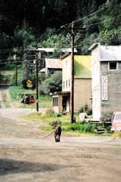Dog walking down Main Street in Chitina past Spirit Mountain Artworks Gallery